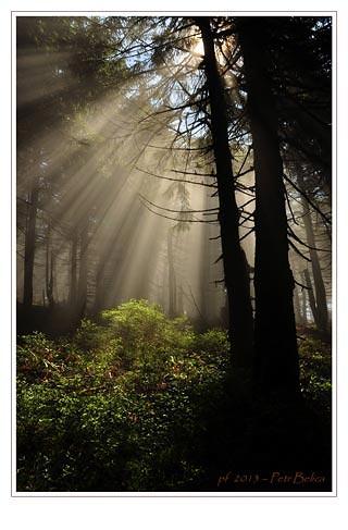 pf_2013_smrk_svetlo.jpg